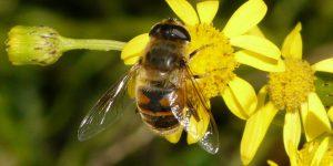 Il maltempo stressa le api e dimezza il miele