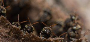 """Dagli insetti, """"bioraffinerie"""" per produrre energia, nuovi materiali e compost"""