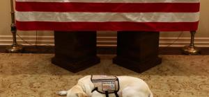 Storie di animali ... Il cane di Bush padre veglia ancora il presidente