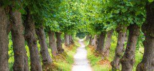 Clima: perché non piantare un albero per ogni italiano?