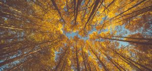 21 novembre: Festa dell'Albero