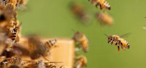 Clima: caldo riporta al lavoro 50 miliardi di api