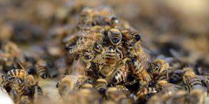 Le api sanno come contare da zero.
