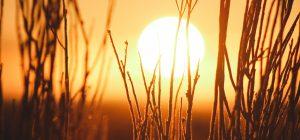 Caldo: SOS per 4,3 mln di over 90. I consigli di Coldiretti
