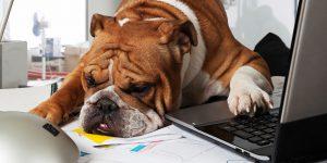 Ci vorrebbe un cane . . . anche in ufficio!