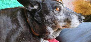 Animali: Cocchina, una storia a lieto fine