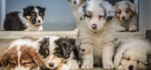 Animali: traffico cuccioli vale 300 mln all'anno