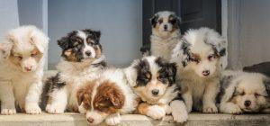 Criminalità: il traffico di cuccioli vale 300 mln l'anno