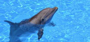 """Canada: via libera alla legge """"Free Willy"""". Mai più delfini e balene in cattività"""