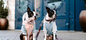 Consumi: Doggy Bag antispreco per 4 italiani su 10