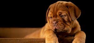Stress da rientro anche per i cani. E' tempo di routine e solitudine