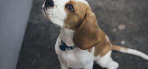 Pagati per viaggiare con il proprio cane