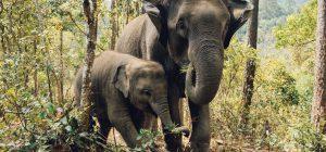 Reintrodurre specie estinte in Europa come gli elefanti? ... Lo dice la scienza