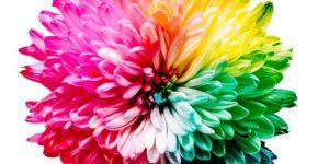 La percezione dei colori dipende anche dall'umore
