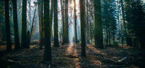 Una foresta contro l'inquinamento da aereo. L'ha piantata un tour operator