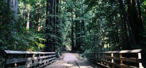 21 marzo: Giornata Internazionale delle Foreste ... patrimonio ineguagliabile