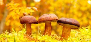 Le piogge portano i funghi. E' boom al Nord!