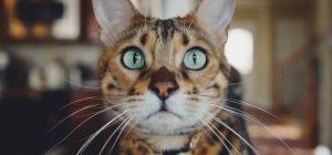 Oggi è la Festa del gatto