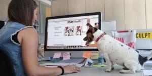 Oggi è la giornata mondiale del cane in ufficio