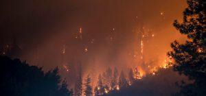 L'Australia brucia, migliaia di vigili del fuoco mobilitati