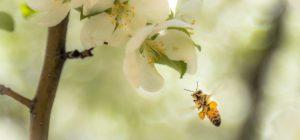 Gli insetti stanno diminuendo in tutto il mondo ... è allarme