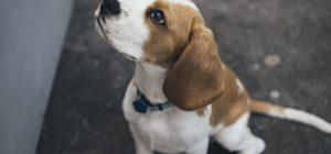 Parli con il tuo cane? Sei molto intelligente!
