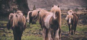 In aereo col pony: solo così evita le crisi di panico