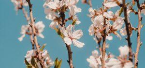 Clima: marzo pazzo, 3 gradi in più e l'Italia fiorisce