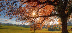 Caldo: autunno bollente sconvolge piante e animali
