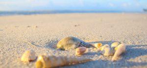 Il serpente più lungo d'Europa avvistato su una spiaggia croata