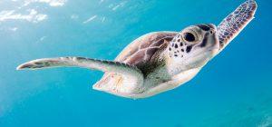 Strage di tartarughe marine per il freddo a Cape Cod