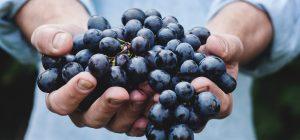 Giappone: grappoli d'uva venduti all'asta per 10 mila euro circa