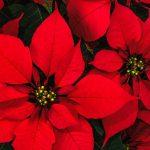 Natale: Stelle per 1 famiglia su 2