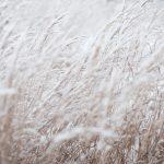 Maltempo: Sos in campi e stalle sepolti dalla neve