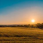 Caldo: SOS campi, al via irrigazione di soccorso