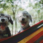 Vacanze: parte con il proprio animale 1 italiano su 5