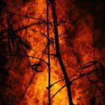 Amazzonia: arrestate 63 persone da fine agosto per gli incendi