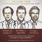 Nobel per la medicina 2019 a due americani ed un britannico