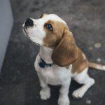 Oggi è la Giornata Internazionale del Cane