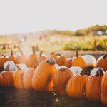 Halloween: caldo taglia del 10% produzione zucche