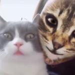 Umani che diventano gatti... grazie a un'app!
