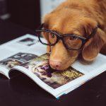 Anche nel Comune di Greve in Chianti si va a lavorare con il cane