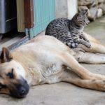 Coronavirus e animali: LNDC, in calo l'abbandono