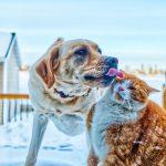 Ripartenza senza stress per il cane e il gatto