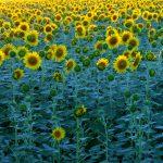 Coldiretti: nella 50° Giornata della Terra torna ad essere strategica l'agricoltura