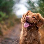Il comportamento dei cani cambia per comunicare meglio con gli umani