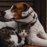 Disinfettare va bene ... ma con gli animali attenzione!