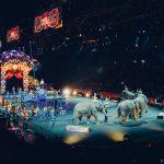 Da Friuli a Sicilia latte, frutta e verdura per salvare animali del circo