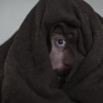 """Cinema: Nastro d'Argento 2020 a """"Volevo Nascondermi"""" con Elio Germano"""