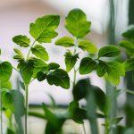 E' made in Italy il primo micro-orto in orbita per coltivare verdure nello spazio